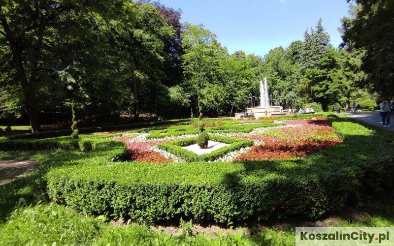 Róże i fontanna w parku w Koszalinie
