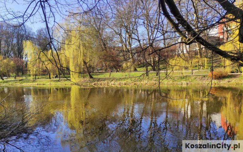 Staw Zamkowy w Parku Książąt Pomorskich w Koszalinie