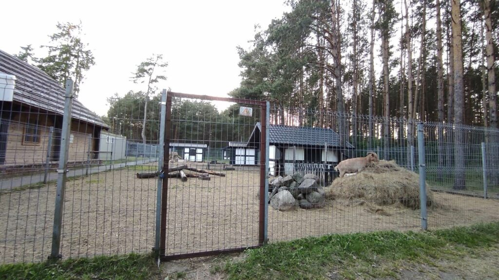 Kozy w Mini Zoo w Sporyszu