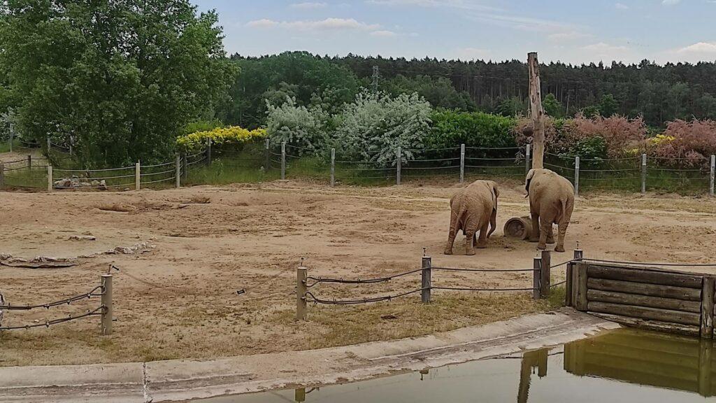 Słonie w Zoo Poznań