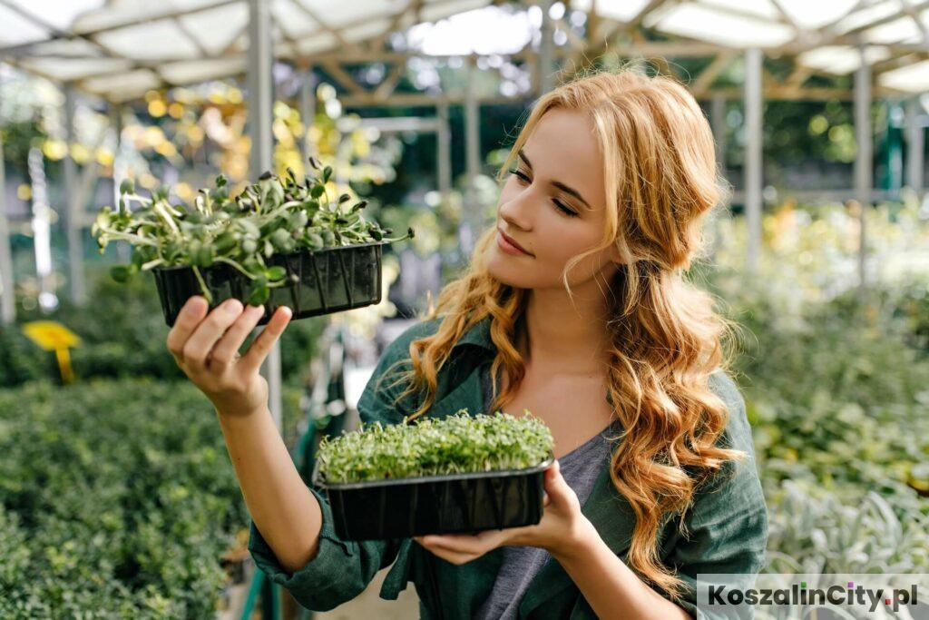 Sprzedaż sadzonek roślin w Koszalinie