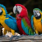 Papugarnia w Koszalinie
