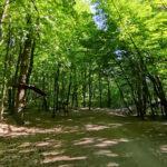 Ścieżka na Górze Chełmskiej