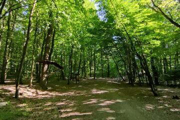 Góra Chełmska w Koszalinie – wieża widokowa, sanktuarium i szlaki piesze