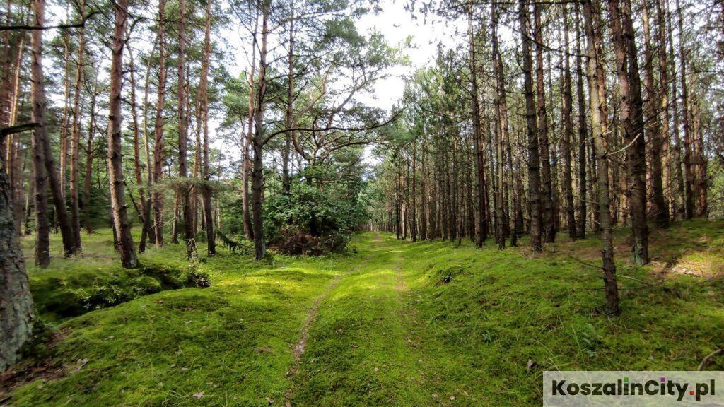 Rezerwat Przyrody Łazy