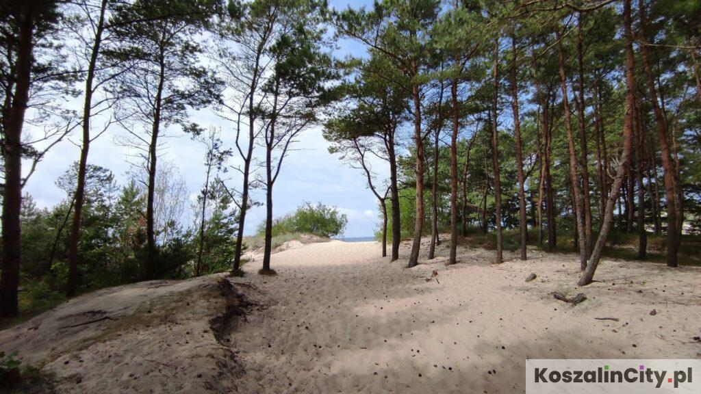 Wejście na plażę przez las w Łazach
